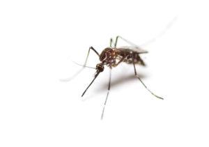 mosquito service austin, tx
