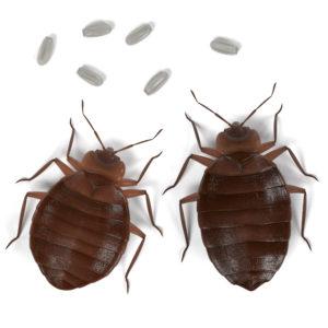 bedbug company austin tx